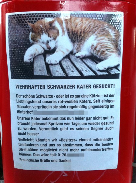 Zettelgold / Kater
